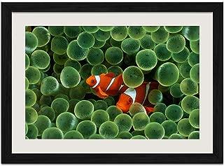 Marine Fish - Art Print Wall Black Wood Grain Framed Picture(20x14inch)