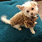 Pet Clothes Axchongery Puppy Woolen Warm Coat Fashion Leopard Printed Fuzzy Costume Small Dog Cat Winter Apparel