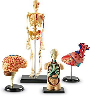 Anatomy Models Bundle Set, Brain, Body, Heart, Skeleton, Classroom Demonstration Tools, Teacher Accessories, Grades 3+, Ages 5+