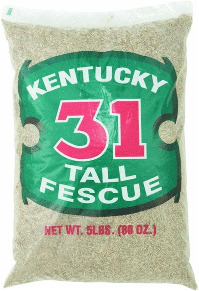 Barenbrug Kentucky 31 Tall Fescue 1 year warranty Grass 1000 Ft. Seed Max 46% OFF Sq. Polyba