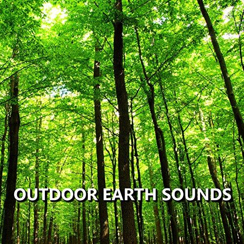 Bright Outdoor Nature Recording
