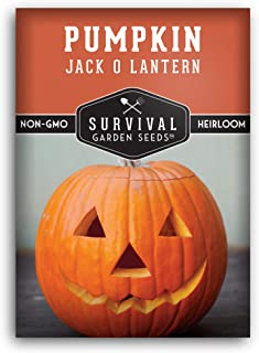 Survival Garden Seeds - Jack-O-Lantern Pumpkin Seed for Planting - Packet with Instructions to Plant and Grow in Your Home...