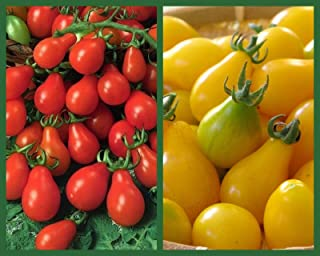 Best yellow pear tomato Reviews