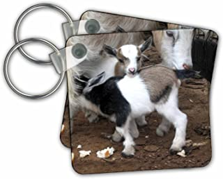 3dRose Pygmy Goat Family Key Chains, Set of 2 (kc_1285_1)