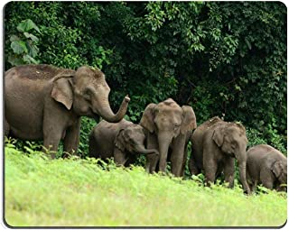 Natural Rubber Gaming Mousepad Beautiful Family of Asian Elephant Elephas Maximus at Khao Yai National Park Thailand (Mous...