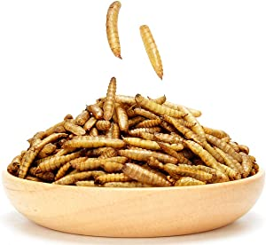 Dried Black Soldier Fly Larva/Dried Mealworms - 2 LBS 100% Natural BSF Larvae Treats for Chickens, Birds, Reptiles, Hedgehog, Geckos, Turtles (2 LB)