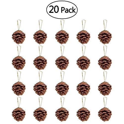 Pinecones For Crafts Amazon Com