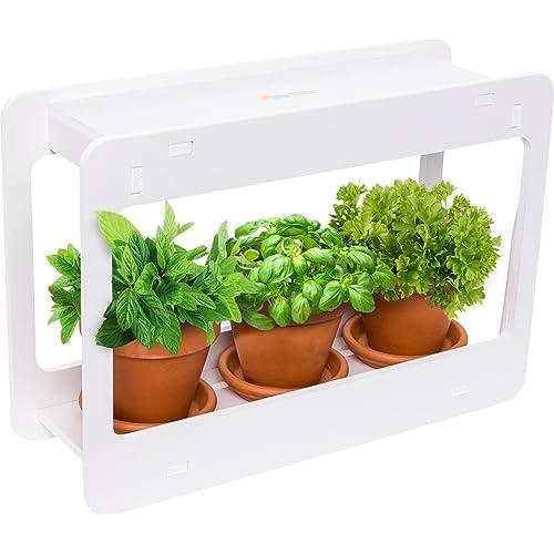 Apartment Vegetable Garden: Amazon.com