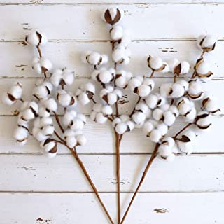 "WMAOT Cotton Stems - 30"" Tall - 13 Bolls/Stem Farmhouse Style Real Elastic Cotton Stalk Rustic Floral for Home Decor Wedding Centerpiece (Pack of 3)"