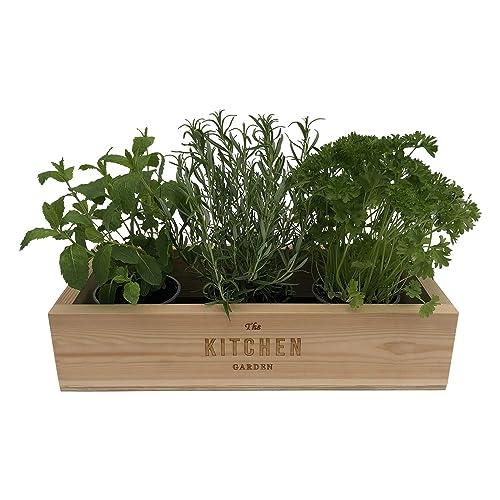 Windowsill Herb Planter: Window Sill Boxes: Amazon.co.uk