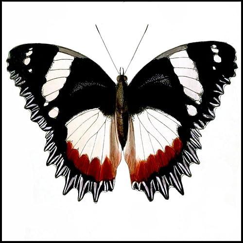 Schmetterling Arten Trivia Quiz