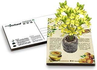 Eco-Postcard | Regalo ecologico con semi di Senape | Kit coltivazione pianta di Senape | Cartolina ecologica Ricette