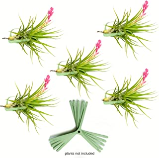 ArtAK Air Plant Holder for Vertical Garden 5 Pack Air Plants House Plants Make Great Wall Decorations for Living Room Wall Planters for Hanging Plant and Tillandsia Air Plants Living Wall Terrarium