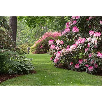 Amazon Com Csfoto 8x6ft Spring Garden Backdrop Blooming Flowers Lawn Park Beautiful Natural Scenery Background For Photography Outdoor Leisure Vacation Tour Photo Vinyl Wallpaper Camera Photo