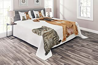 Bedding Full Duvet Cover Set Boxer Dog 3 Piece Set (1 Duvet Cover + 2 Pillow Shams) Photo of a Cat and Dog Sitting Together Animal Friendship Theme Pet Lover Concept Comforter Cover with 4 Ties Color