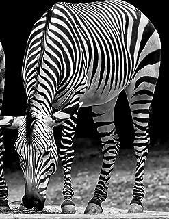 Notebook: zebra horse mountain zebras Africa equine donkey zoo African safari herd wildlife wild