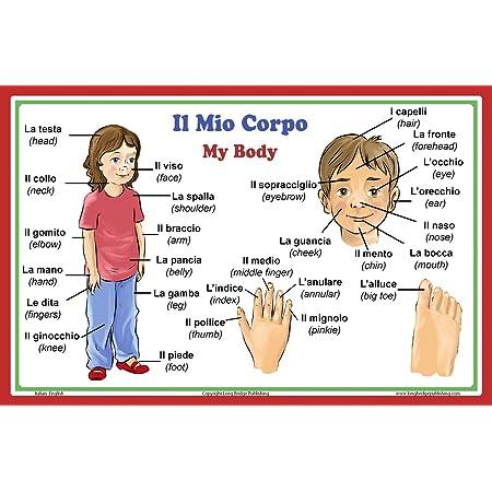 Lengua Italiana Escuela Póster Italiano Palabras Sobre Las Partes Del Cuerpo Con Inglés Traducción Bilingüe Aula Gráfico Home Kitchen