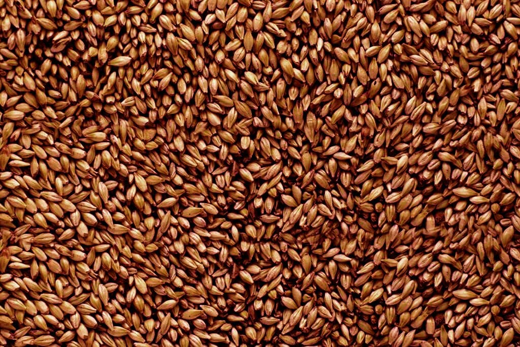 Malt - Briess Caramel Clearance SALE Limited Recommended time Sack 80L 50 lb