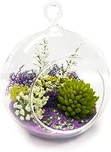 "Air Plant Terrarium Kit | Purple Passion | Natural Accents Series | Complete Tillandsia Gift Set | 4"" Glass Globe | Nautical Crush Trading TM Artificial Plant Purple NCTS6355"