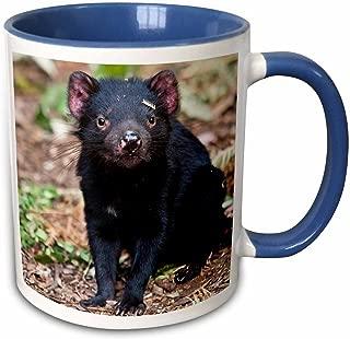 3dRose 133465_6 Tasmanian Devil Wildlife, Tasmania, Australia Mug, 11 oz, Blue