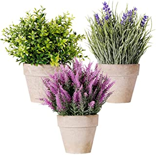 Mini Potted Artificial Money Leaf Plants Set of 3 Lavender Cedar Bud Greenery in Pots Fake Flowers Faux Herbs Small Housep...