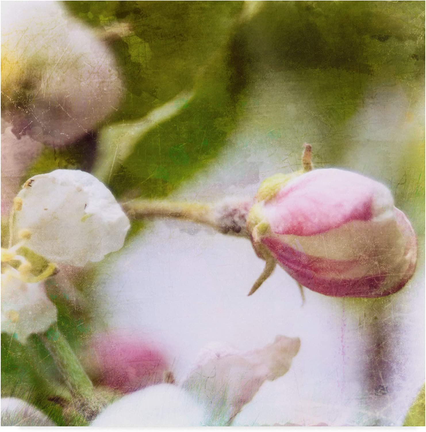 Trademark Fine Art Apple Blossom I by Open Journey, 14x14-Inch