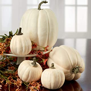 Factory Direct Craft Package of 5 Assorted Size Harvest Off White Artificial Pumpkins for Halloween, Fall and Thanksgiving Decorating