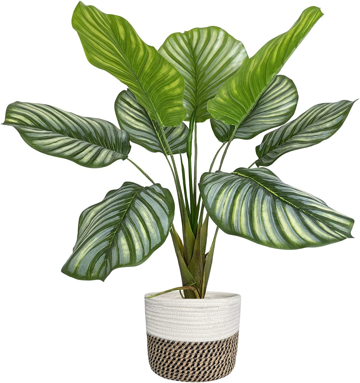 BESAMENATURE Artificial Calathea Popularity Regular dealer Orbifolia Artifi Potted Plants