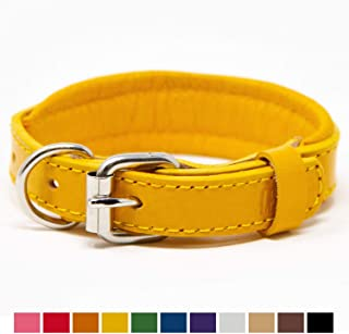 leather and brass dog collar