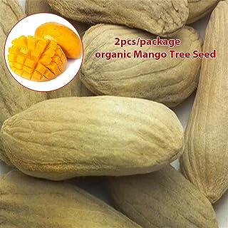 50Pcs Pilea Peperomioides Chinese Money Plant Seeds Pancake Shape Plants Decor