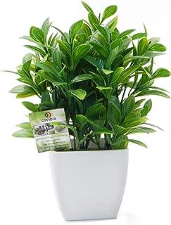 Best office artificial plant Reviews