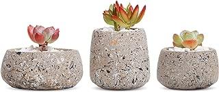 Best retro concrete planters Reviews