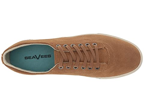 Falcongolden Marrón Hermosa Universitario Equipo Plimsoll Seavees qfzp8wn