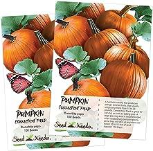 Seed Needs, Connecticut Fields Pumpkin (Cucurbita pepo) 2 Packages of 100 Seeds NON-GMO