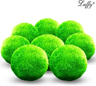 Luffy First Pet Plant Marimo Moss Ball, Fun, Bright and Fluffy, for Educational and DIY Projects, Instigate Natural Learning Habitat