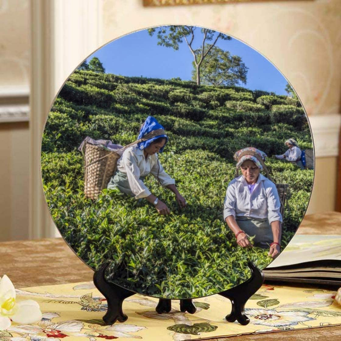Women Pick in Milwaukee Mall Tea Leaves Ceramic Decorative Plates depot China