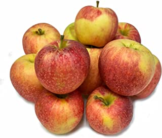 Irv & Shelly's Fresh Picks, 5 Pound Bag of Gala Apples