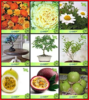 Creative Farmer Air Purifying Plants Combo Flower Seeds & Fruit : Passion Fruit - Yellow, Passion Fruit - Violet, Thailand...