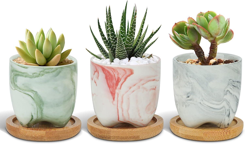 T4U 2.5 Inch Small Multi Industry No. 1 Color Pots Ceramic Max 53% OFF Succulent Planter wi