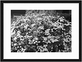 Flowers Victoria BC - Art Print Wall Solid Wood Framed Picture (Black & White 20x14 inches)