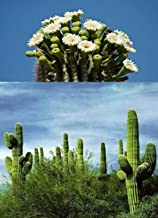 HOT - 20 Saguaro Cactus Seeds -Giant Desert Plant