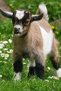 Baby Goats Notebook
