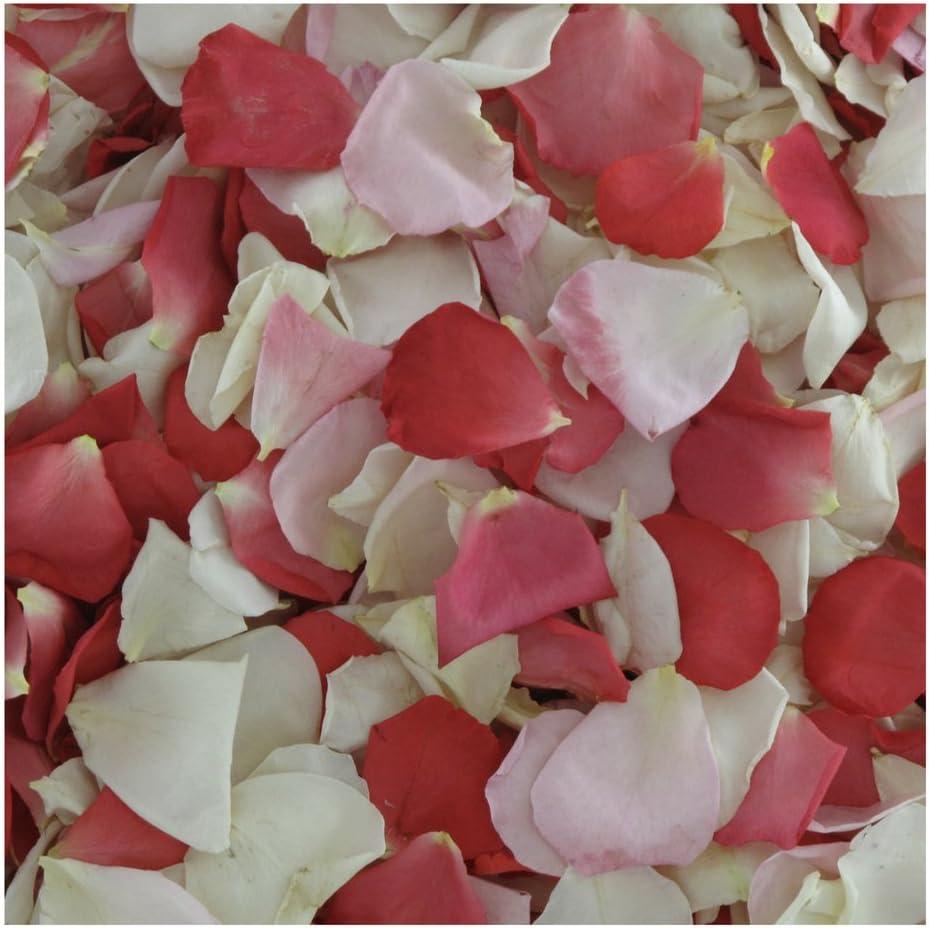 Rose Petals Pretty in Pink. 4800 Rose Petals - 120 Cups Real Ros