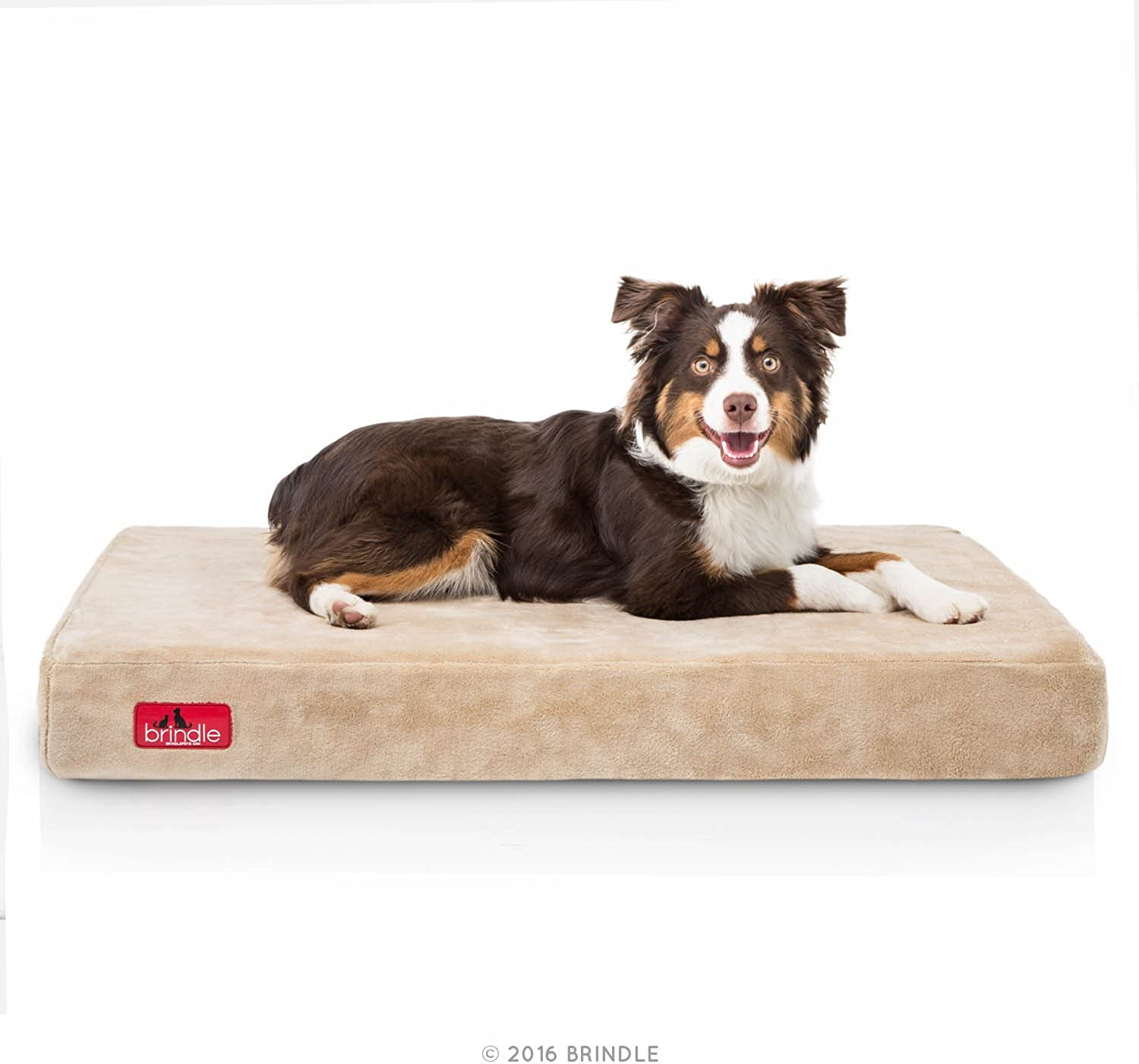 Brindle 4 Inch Memory Foam Orthopedic Dog Bed  Removable Velour Cover with Waterproof Liner  Medium Khaki 34 Inch x 22 Inch