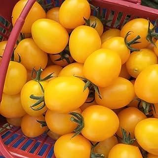 TOYHEART 100 Piezas De Semillas De Hortalizas De Primera Calidad, Semillas De Tomate, Plantas En Macetas Amarillas Frescas...
