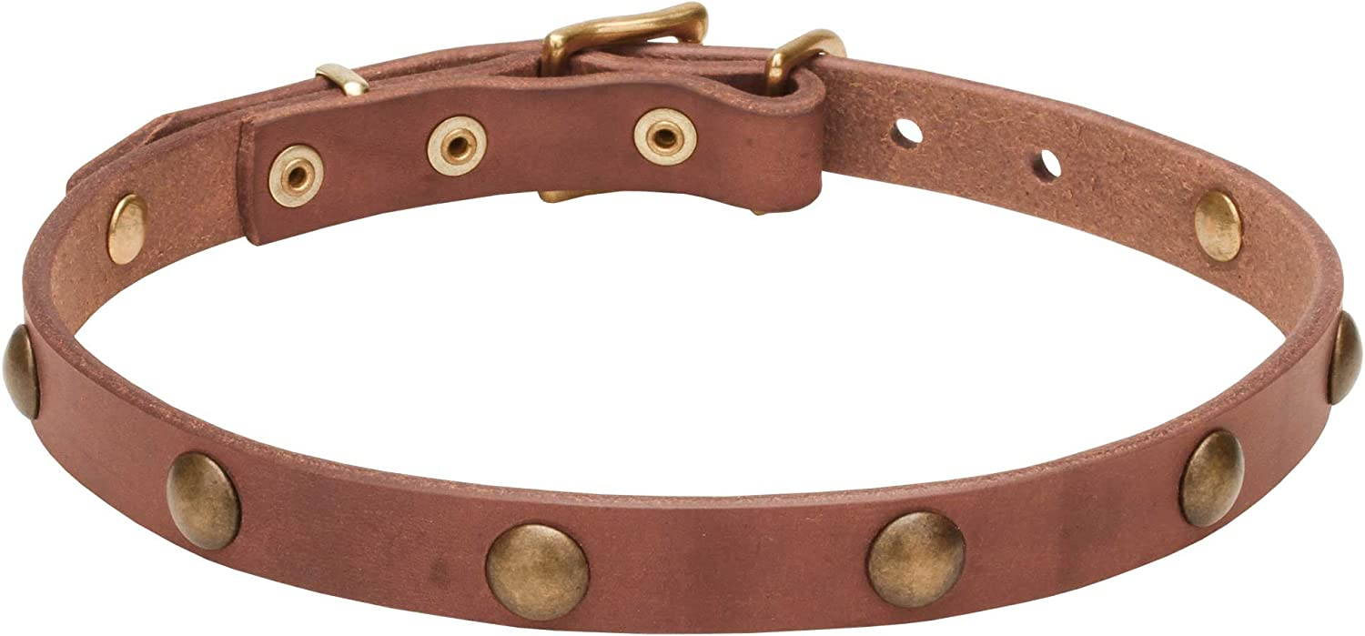 29 inch Tan Leather Canine Collar with goldish Brass Hardware  'Elegant Beauty'  4 5 inch (20 mm) Wide