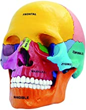 4D Master 26087 4D Anatomy Model Skull Exploded Didactic