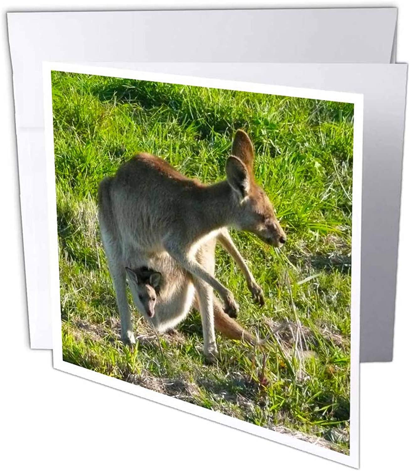 3dRosa gc_22791_2 Grußkarte Kangaroo and Joey Wild Queensland Australia  (15,2 x 15,2 cm) 12 Stück B07BJCL2V1 | New Products