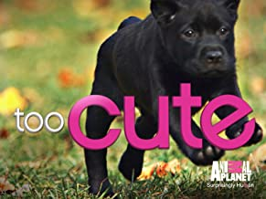 too cute puppies season 1 episode 1