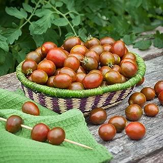Chocolate Sprinkles Grape Tomato - 10 Seeds